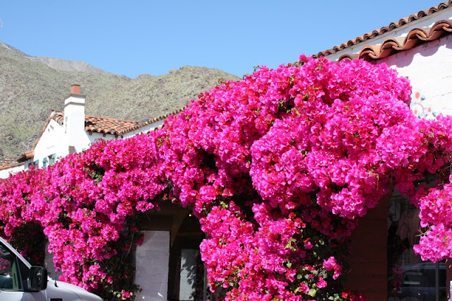 Rainbow-tz blog: BOUGAINVILLEA