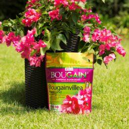 Bougainvillea Plant Food