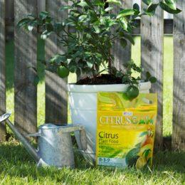 Citrus Plant Food