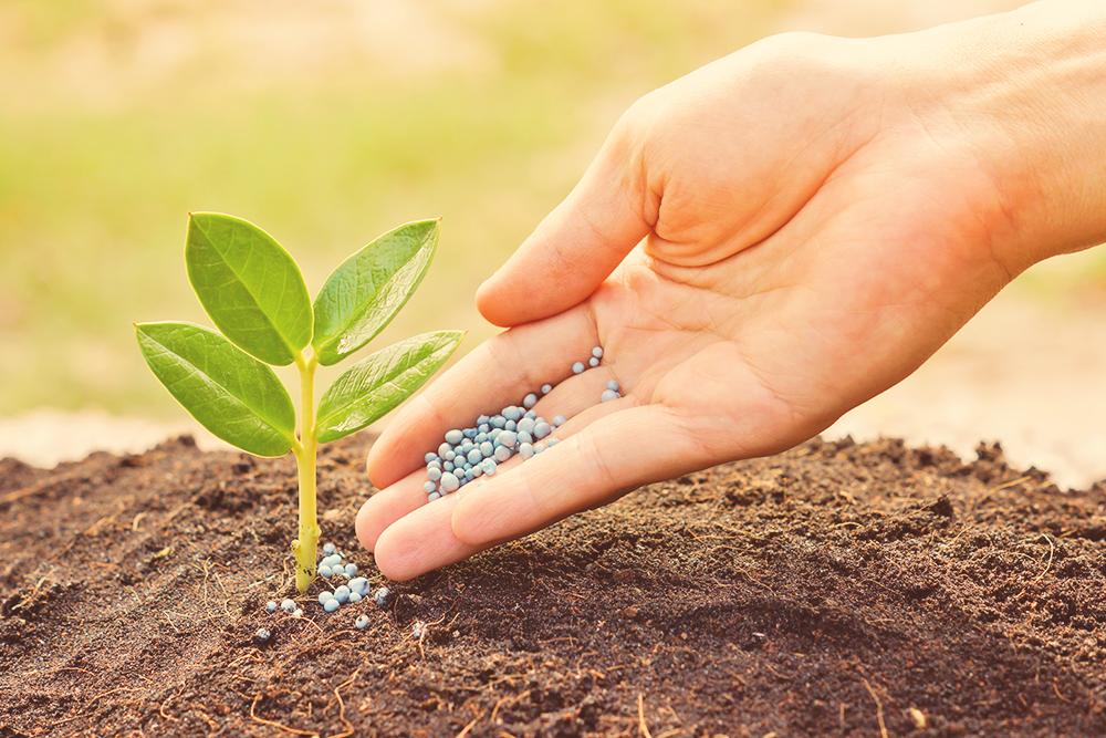 Plant Nutrition Mgt Featured Image – BGI Premium Plant Foods