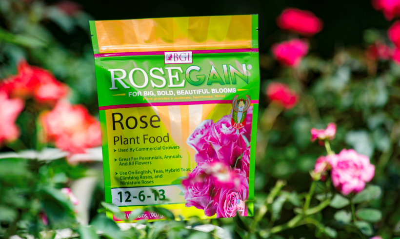 What You Should Know About Rose Fertilizer