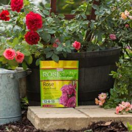 Rose Plant Food