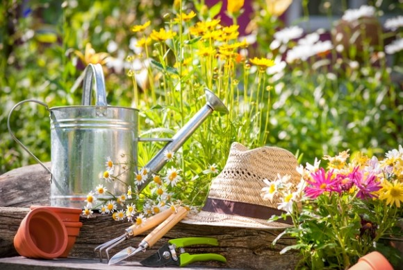 A Critical Key to Your Garden's Success