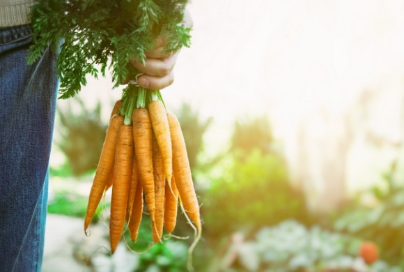 Is Organic Sustainable?