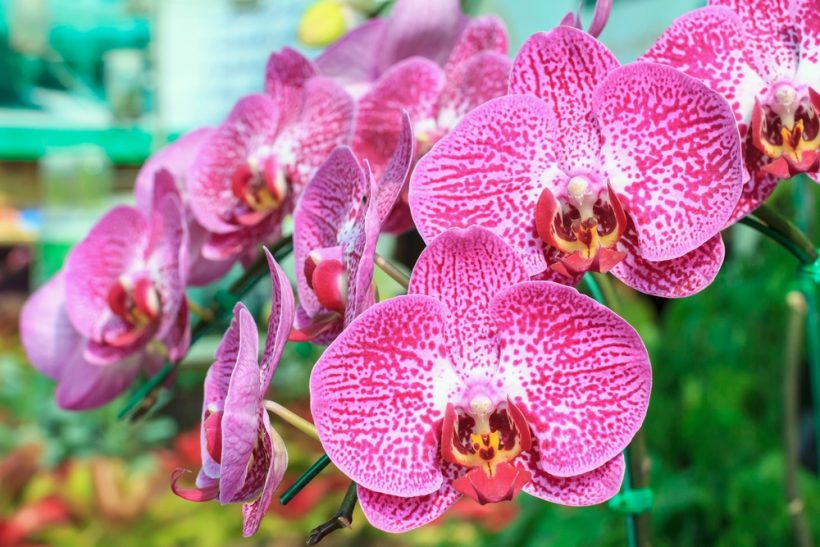 Beginner's Guide To Orchid Care