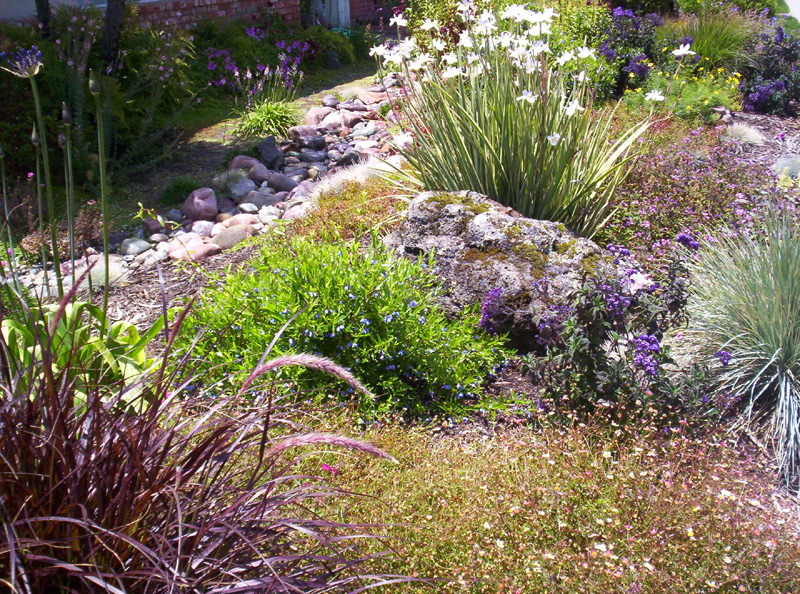 Xeriscaping bgi premium plant foods for Easy care landscape design